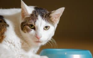 Potassium deficiency can cause severe symptoms for your cat. Find out the most common symptoms and how to cure them.