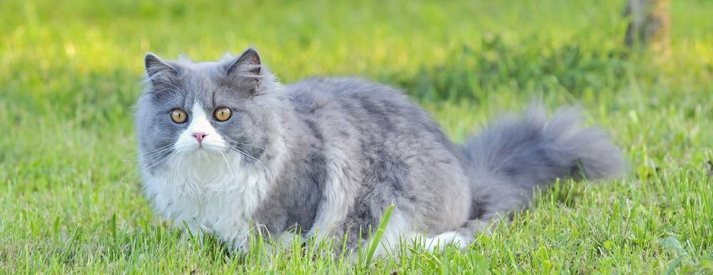 9 Most Affectionate Cat Breeds - Ragdoll