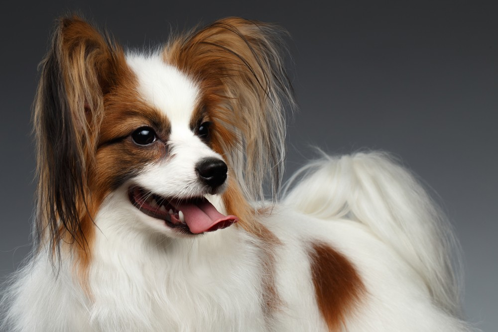 Which Dogs are Best With Cats
