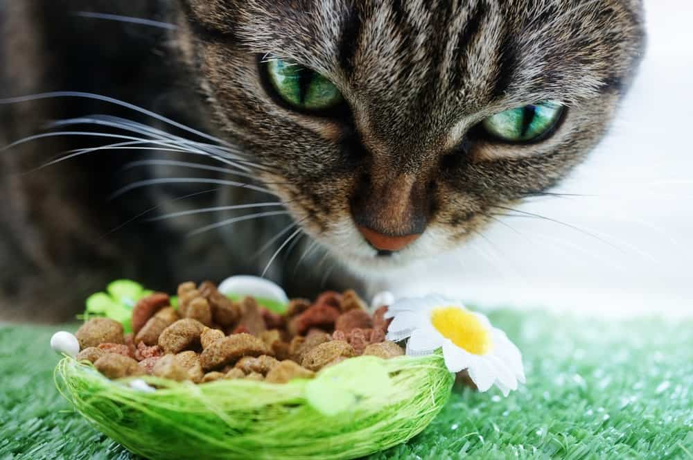 The wet versus dry cat food debate has been going on for years, but science has discovered what cats crave and need to sustain a long healthy life.