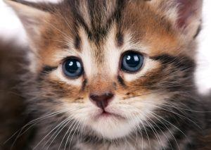 Find out how to tell if your cat is depressed an how to help the kitty blues.