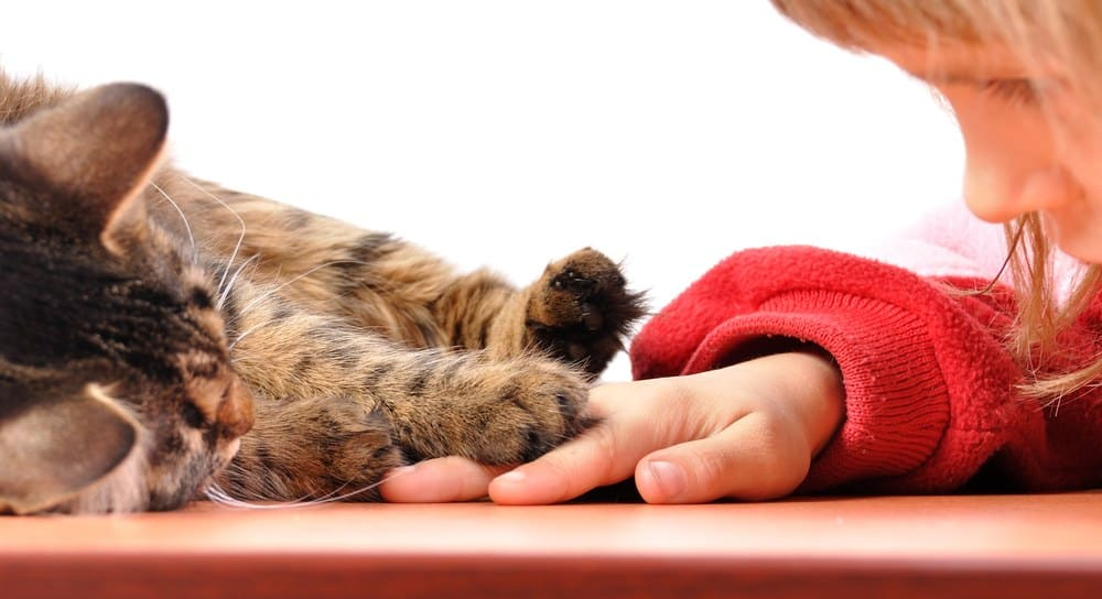 Best Cats for Kids – 14 Breeds That Get Along with Children