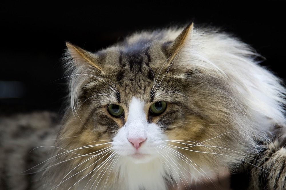 Best Cats for Dogs