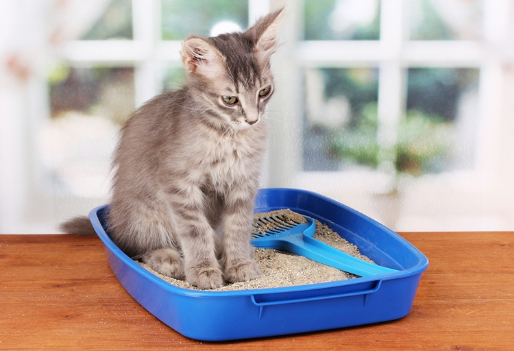 Do you suspect that your cat is allergic to litter? Read these tips and hints that may help your itchy kitty.