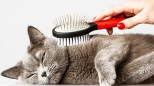 How to Brush a Cat that Hates It