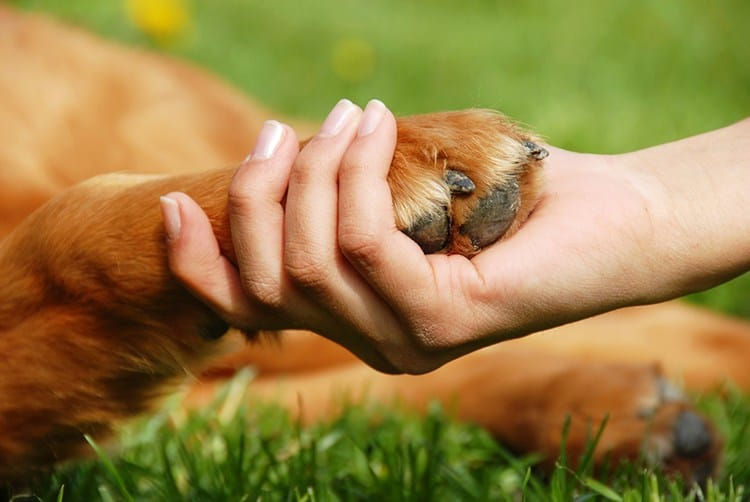 How to Cope With Pet Loss
