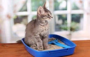 Find out why your cat may smell like poop and what to do about it.