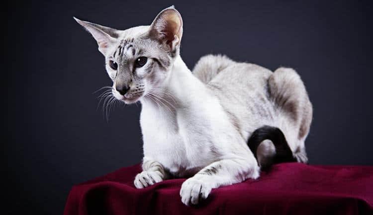 Cat Walks Along Walls Gets Stuck In Corners