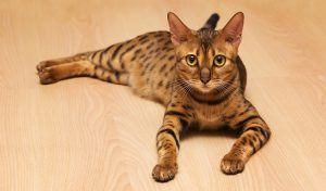 Best Cats for Kids - 14 Breeds That Get Along with Children