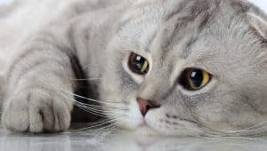 Find out the most common reasons for lack-of-purry response from your feline friend.