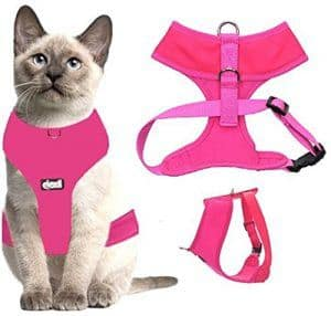 Find out how to choose the best cat harness for your feline and our reviews of the best options on the market.