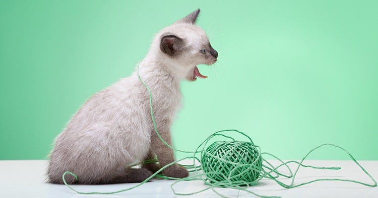 Find out how to know if your cat has swallowed string and how to handle this stressful and, potentially dangerous, situation.