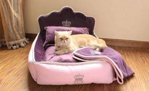 Cats can be picky creatures – see our top choices and tips for finding the best cat bed for the kitty.