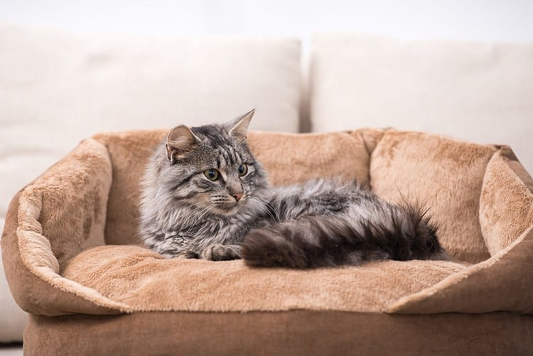 Best Cat Beds – our top 5 choices