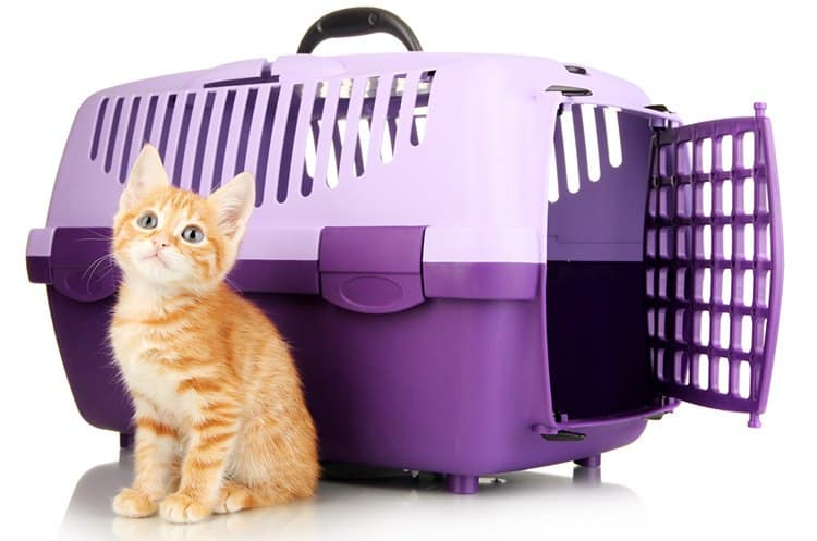 Best Cat Carrier – Our Top Choices 2019