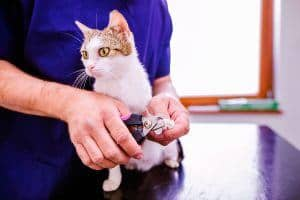Find out how to choose the best cat nail clippers for your feline and our reviews of the best options on the market.