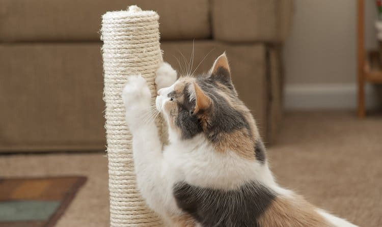 How to Get a Cat to Use a Scratching Post