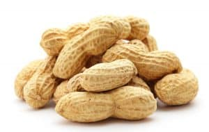 Ever wondered if peanuts are harmful to your cat? Read our article to find out…