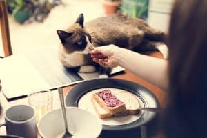 Ever wondered if bread harmful to your cat? Read our article to find out…