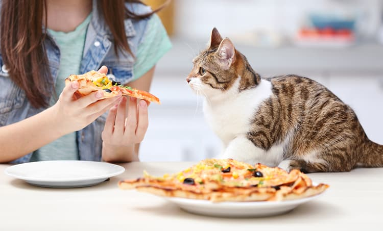 Ever wondered if pizza is harmful to your cat? Read our article to find out…