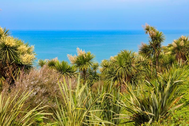 Grass Palm