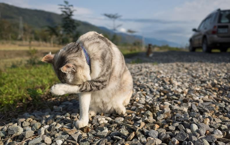 Cat Licked Revolution