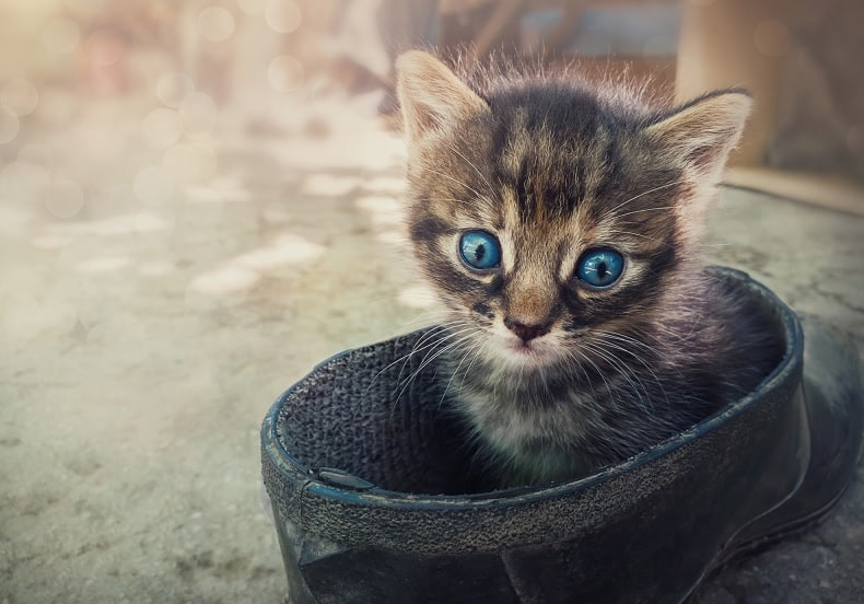 How to Tell if a Mother Cat has Abandoned Her Kittens