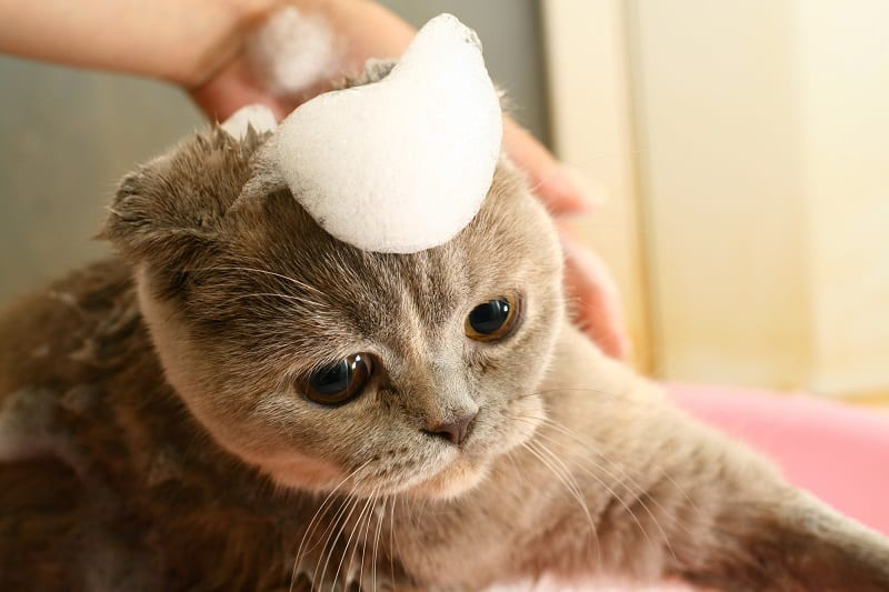Can You Use Baby Shampoo On Cats
