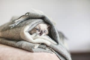 How Cold Is Too Cold For Cats In A House
