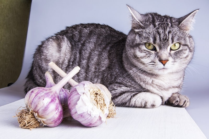 How Much Garlic Is Toxic To Cats
