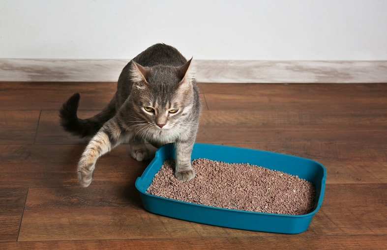 How to get cat urine out of hardwood floor