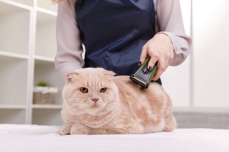 Shaving Cats Pros and Cons