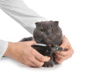Cat Ingrown Nail