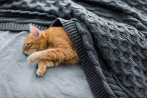 Cat Microchip Side Effects