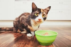 Cat Not Eating Wet Food