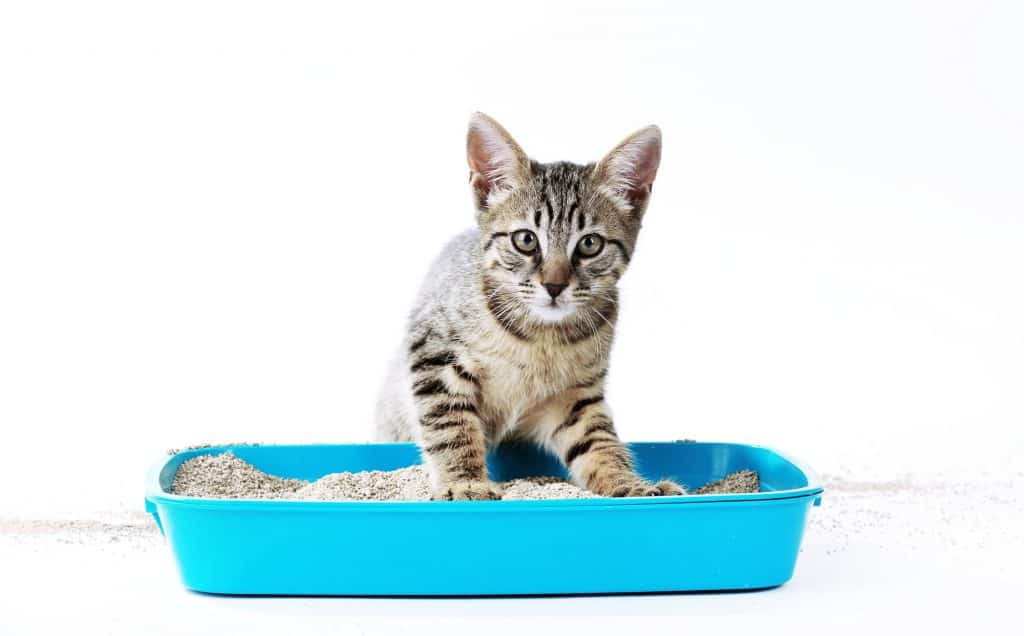 How to Clean a Litter Box with Bleach