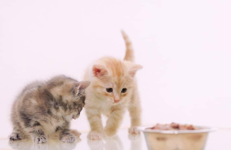How to Wean a Stubborn Kitten