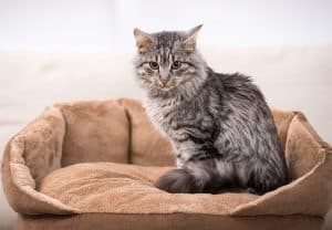 Best Cat Bed For Older Cats