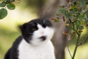 Cat Head Shaking Like Parkinson's