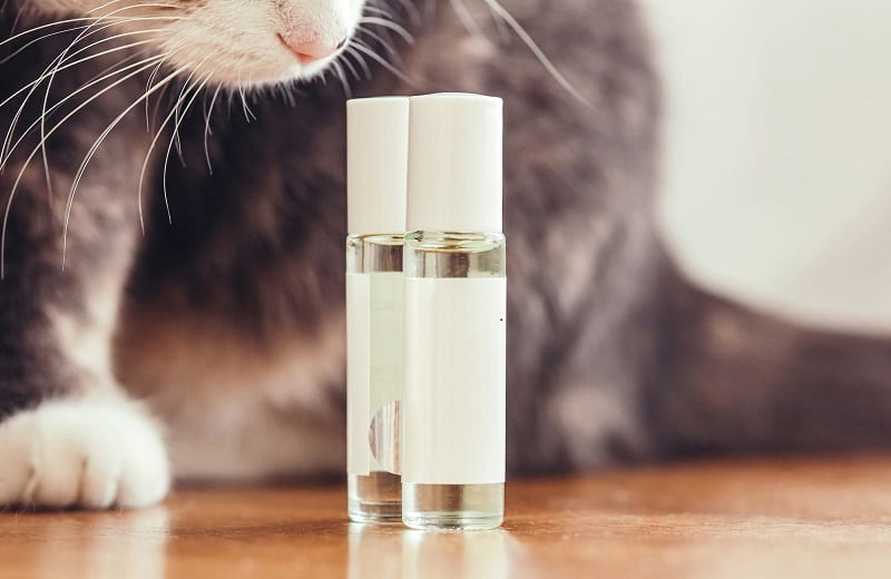 Essential Oils To Keep Cats Off Counters
