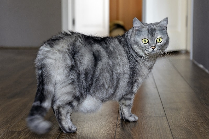 How Can You Tell If Your Cat Is Just Pregnant or Just Fat