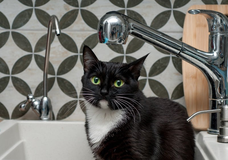 How Often Should You Bathe a Cat?