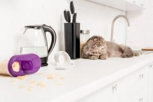 How To Keep Cats Away From Certain Areas