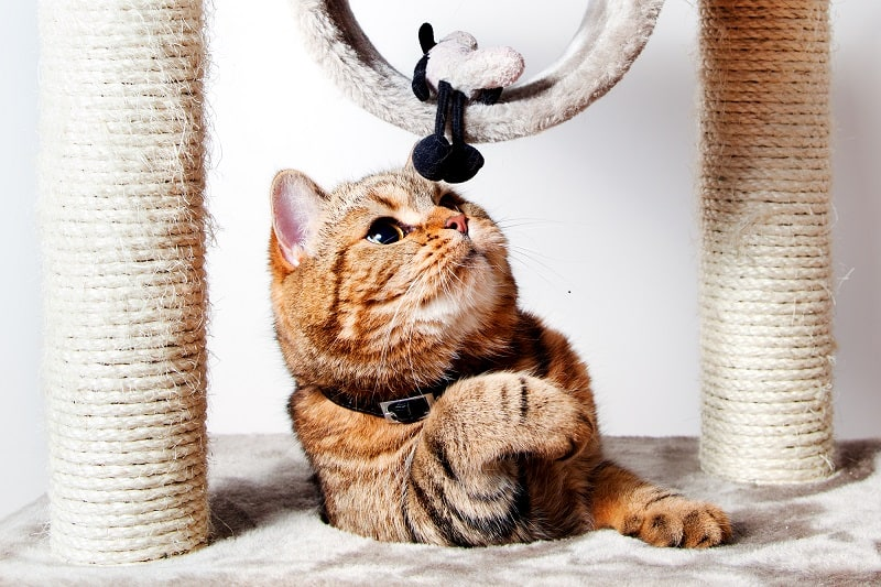 What is Feliway Diffuser