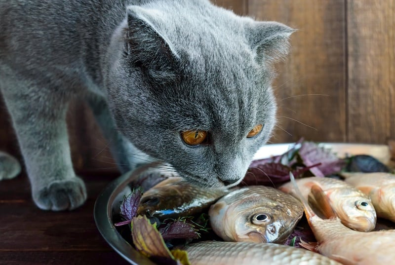 Why Do Cats Like Fish
