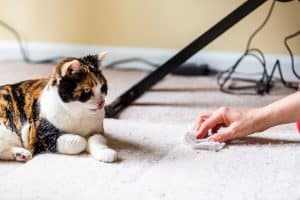 Cat Licking The Carpet
