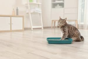 Cat Litter That Doesn't Stick To Paws