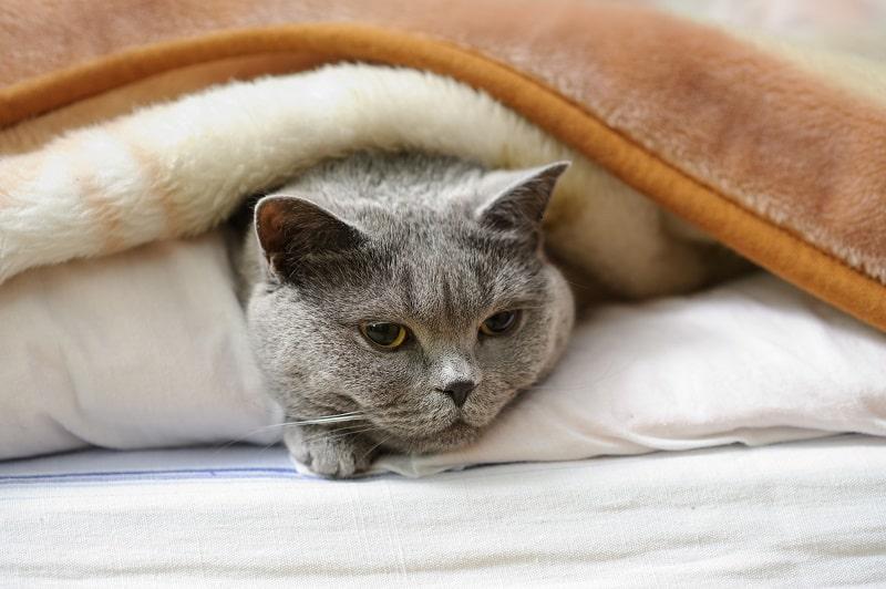 Cat Panting Stress