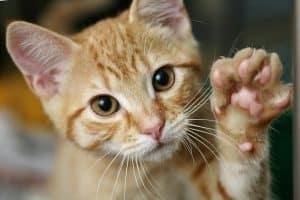 Dry Cat Paws