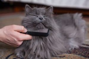 How Often Should I Brush My cats